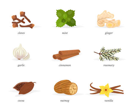 Spices vector illustrations set