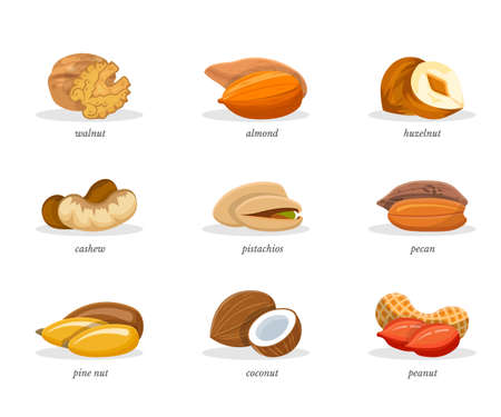 Nuts vector illustrations set Stock Illustratie