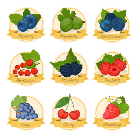 Berries, fruit with names vector illustrations set