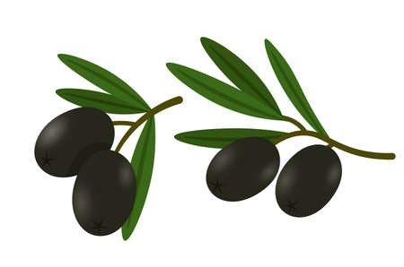 Olives on branches flat vector illustrations set