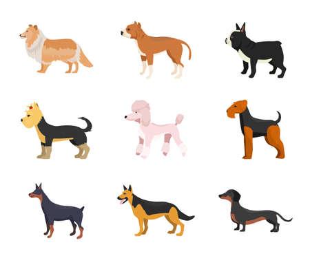 Different dog breeds flat vector illustrations set Vector Illustratie