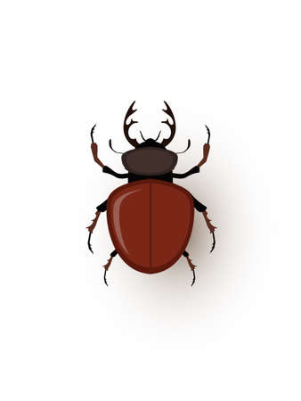 Stag beetle, tiny bug flat vector illustration