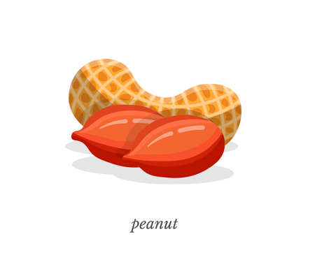Peanut flat vector illustration with typography