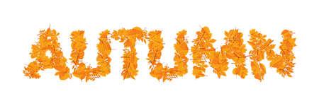 Orange leaves Autumn word vector illustration