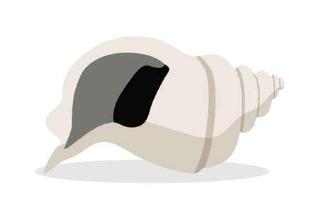 Sea shell vector cartoon illustration