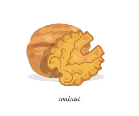 Walnut flat vector illustration with typography. Delicious organic snack, natural product. Unbroken nutshell and nut kernel closeup. Vegan food ,healthy nutrition, vitamin diet. Tasty protein meal