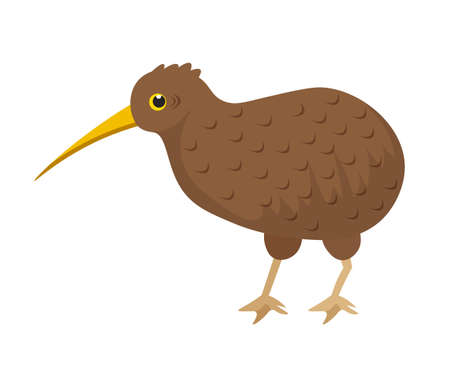 Cartoon brown small exotic kiwi bird with long beak isolated on white backdrop. Quirky flightless feathered character. Wildness and wildlife. Nature and rare animals. Vector flat illustration