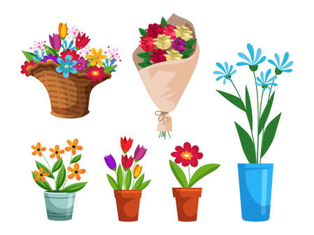 Isolated beautiful flower bouquet in wrapping and blooming plant in clay or plastic flowerpot, wicker basket set. Tulip, rose and bud composition. Decorative florist shop item on white background Иллюстрация