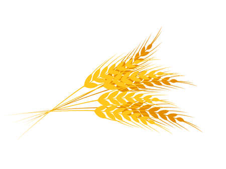Flat yellow ripe spikelets with wheat grains composition. Cartoon oat bunch. Sereals for bakery. Farm crop, harvest. Flour production design. Whole stalks bouquet. Vector illustration on white