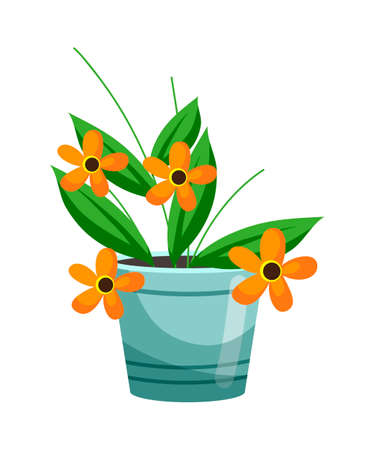 Floristic composition for present or gift. Floral shop assortment. Blooming orange flower growing in brown clay pot isolated on white background. Decoration, design interior botany element. Floristry  イラスト・ベクター素材