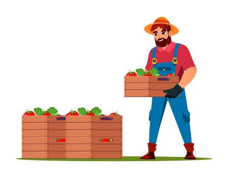 Farmer harvesting fresh vegetable crop in wood box