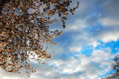 Spring evening sunlight illuminates cream blossom against a dramatic sky. Copy space. Stock fotó