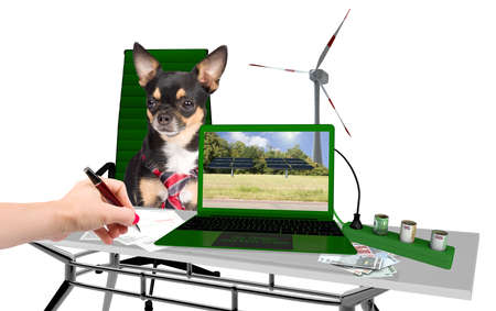 Cute dog chihuahua renewable energy