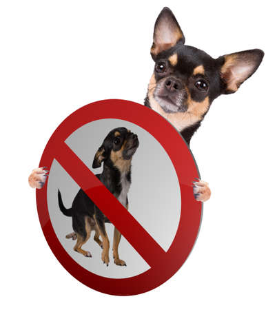 excrement: Cute dog have roadsign between the legs Stock Photo