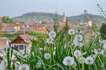 Some dandelion with an city in backround and blue sky photo