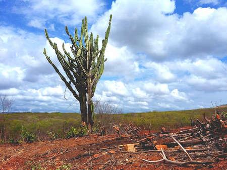 northeast: cactus