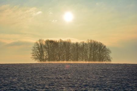 winter sunrise: Sunrise in winter with trees