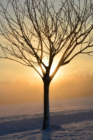 winter sunrise: Sunrise in winter with tree