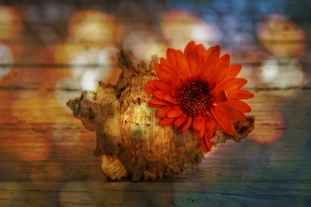 storage box: orange gerberas and seashell on old wooden planks with texture