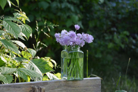 Bouquet Chives with purple flowers in clear glass on wood with natural background in sunlight