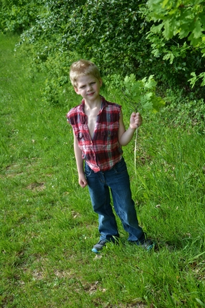 freely: Small blond boy stands on green meadow and holds on branches