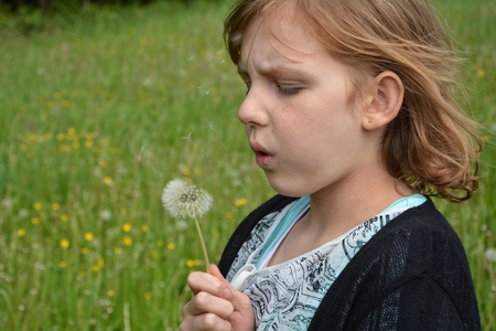 freely: Small girl blows dandelion on green meadow Stock Photo