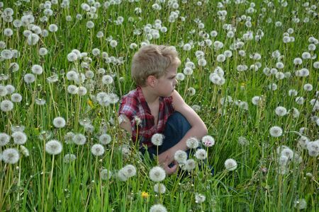 freely: Small boy of the side sits in meadow with many dandelion