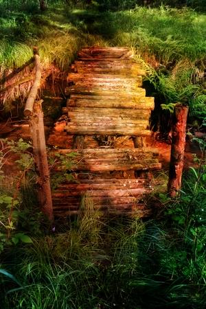Old rotten bridge on stream in the sunlight