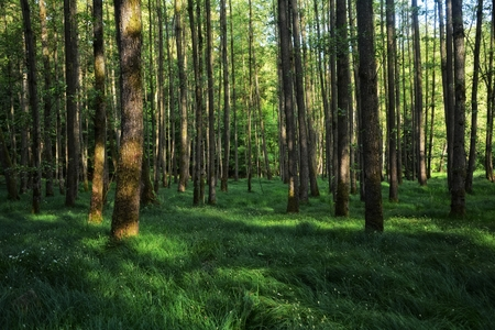 Trees and tall grasses in the forest in the early morning