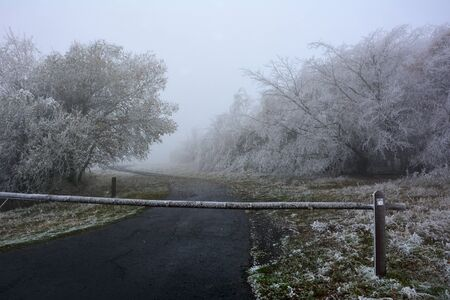 Icy trees on a cold winter day with a barrier in front of a road in the high Rhön, Bavaria, Germany with fog