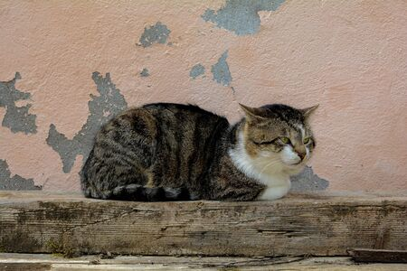 Cat is resting on a wooden beam in front of an old wall   and looks to the side Banco de Imagens