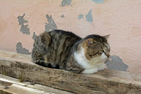 A Cat is resting on a wooden beam in front of an old wall   and looks to the side Banco de Imagens