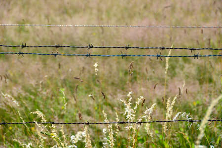 An old rusted barbed wire in nature with tall grass Фото со стока
