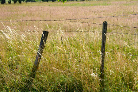 An old rusted barbed wire in nature with tall grass
