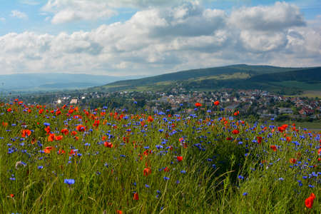 Meadows with cornflowers and poppies, with a view of the holiday village Ostheim in the Rhoen, Bavaria, Lower Franconia, Germany