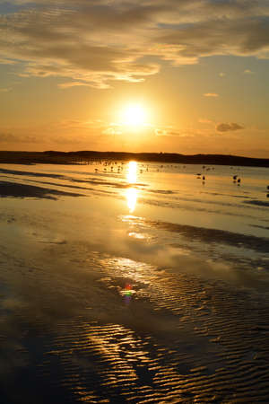 Sunset at low tide over the sea with lots of seagulls