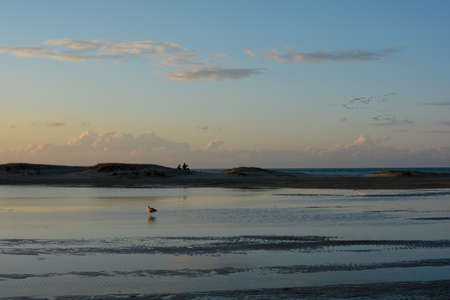 Evening mood at low tide on the North Sea coast, with a seagull in the water and people on the dunes