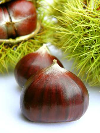 chestnut tree: Chestnut