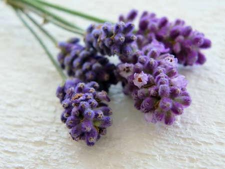 Bild von frischen Blumen und Lavendel Lizenzfreie Bilder