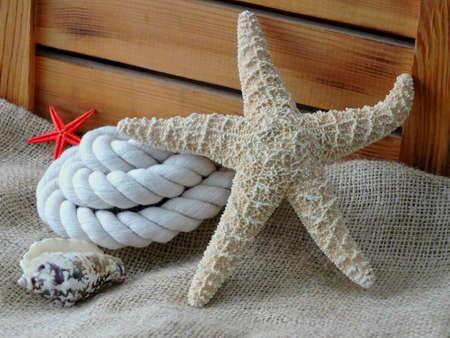Bild von einem Seestern