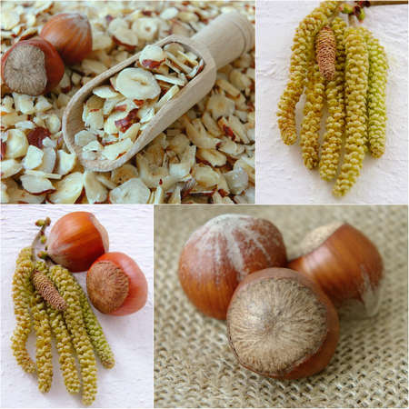 A collage of hazelnuts photo