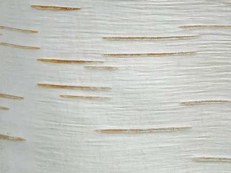 Bild von einer Birkenrinde