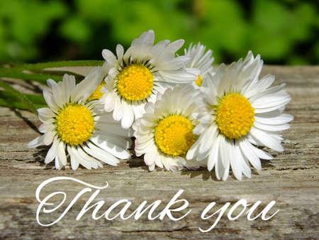 Bild der Gänseblümchen mit Schriftzug danke Lizenzfreie Bilder