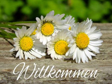 Bild von Gänseblümchen mit deutscher Beschriftung Lizenzfreie Bilder - 35059449