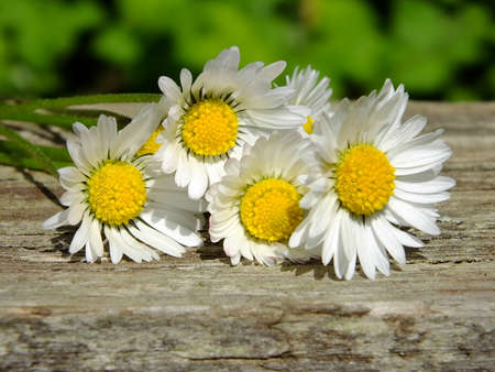 Daisies on wooden background with copy space Standard-Bild