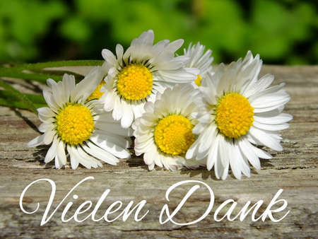 Image of daisies with German lettering Stock Photo