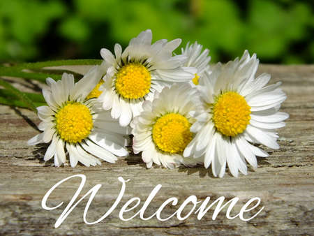 Image of daisies with lettering welcome Standard-Bild