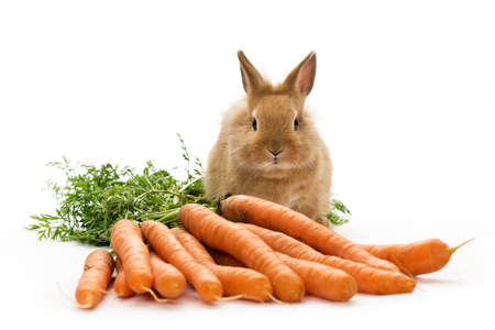 a baby rabbit with carrots on white  Stock Photo