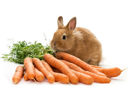 a baby rabbit with carrots on white background Stock Photo
