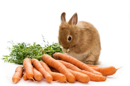a baby rabbit with carrots on white background photo